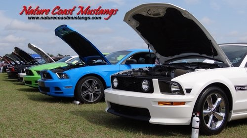 Nature Coast Mustangs Desktop Wallpaper