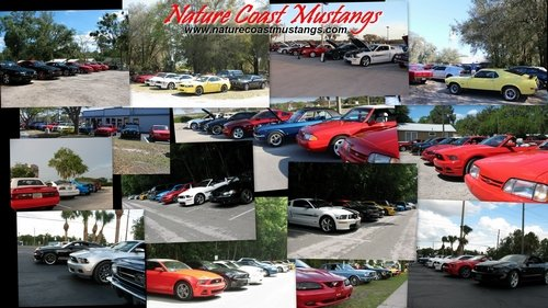 Nature Coast Mustangs - Filling Driveways all over town Desktop Wallpaper