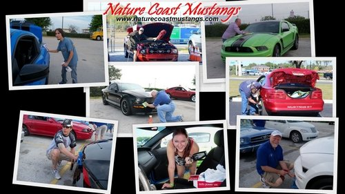 Nature Coast Mustangs Spring Cleaning Desktop Wallpaper